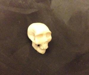 antler skull
